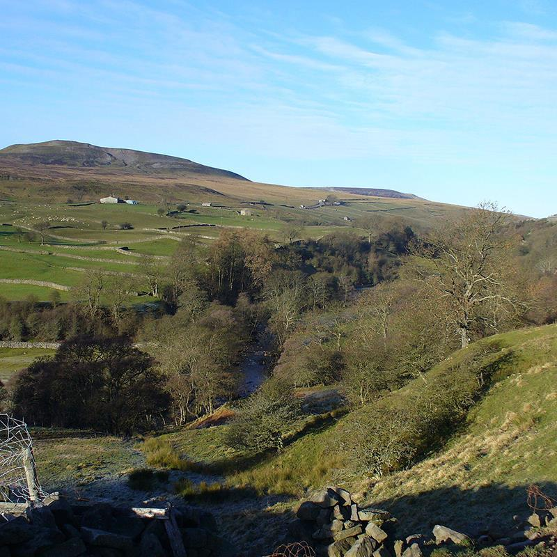 Guided Walk: Natural History in Arkengarthdale
